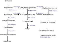 congenital adrenal hyperplasia pathway - Google Search