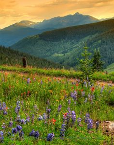 Vail, Colorado - wildflowers, amphitheater, whitewater, fly fishing, mountain biking, horse riding, NY Philharmonic, Dallas Symphony.....lots of fun.