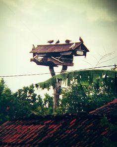 pigeon house @Maesan • Bondowoso, East Java | Indonesia