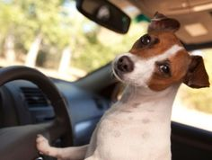 Pet Travel Gear: Road Tripping with Your Pet.
