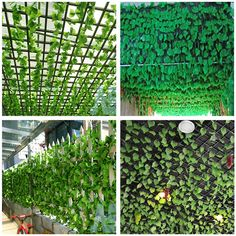 8 Artificial Grape Vine Faux Ivy Leaf Garland Fake Foliage Home Party Decor Ivy Leaf, Leaf Garland, Artificial Plants, House Party, Grape Vines, Leaves, Outdoor Structures, Gardening, World