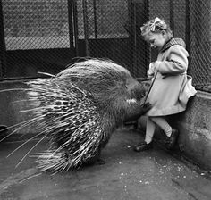 Little girl with a Porcupine at London Zoo. London, February 1953 #Vintage #Art #Retro #London #LDN #Gift #Print #Photo #Photograph #Wall #Art #Old #BlackandWhite