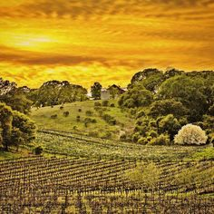 Wine Country winter sunrises have a particular emotion especially on Sundays that causes me to desire a good book and my favorite coffee blend.....yes and I think I will. Good morning from Wine Country!  #artsyheaven #AGameofTones #artofvisuals #best_skyshots #caliexplored #california4fun #country_features #dream_image #explorehisearth #fpog #farmsofinstagram #huffpostgram #heart_imprint #igmasters #igs_newtag #jj_skylove #NatGeoLandscape #pocket_farms #rawcalifornia #renegade_rural…