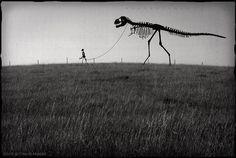 Pet dino skeleton! /cc @Houston Museum of Natural Science