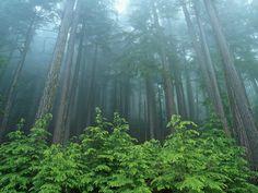 La energía que emana cada tipo de árbol tiene numerosos efectos en tu bienestar.
