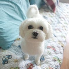 60 Best Small Dog Breeds Images Small Dogs Cute Dogs Cutest Animals