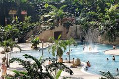Tropical World Germany Lagoon Palm Pools Rainforest Tropical plants - Travel Plans Tropical Island, Tropical Plants, Trip Planning, Swimming Pools, Travel Destinations, Berlin, Germany, World, Places