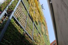 New Green Wall / Jose Maria Chofre | ArchDaily