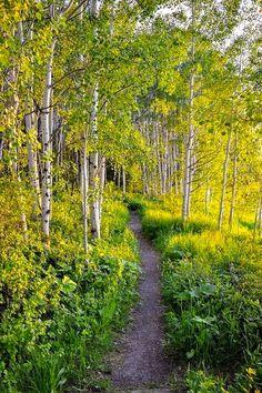 ***Trail through the aspens (Colorado) by Michael Brungardt