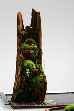 Cute hollowed out tree with moss