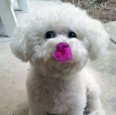 My girl stopped to smell the flower and it stuck on her nose!