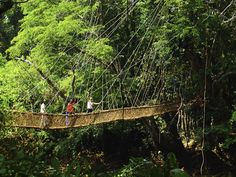 Crossing a #Vinebridge in the Forest region, #Guinea - there are many such beautiful bridges hidden away around here, never easy to find on your own though!