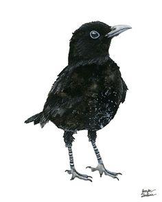 8x10 Art Print. Black Bird Blakely  etsy.com