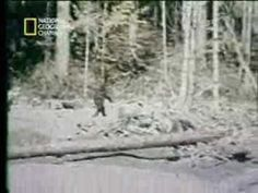 Revelaciones - Pie grande ( Bigfoot ), Yeti, sasquatch 6 / 6