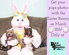 Just a few more days to plan this photo shoot! #pawprintpantry #easter #easterbunny #pawprintpantryCT #dogs