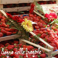Baskets of berries at the sabra, Wild Strawberry fest in #italy, my 2 favorite things combined, strawberries plus Italy!!
