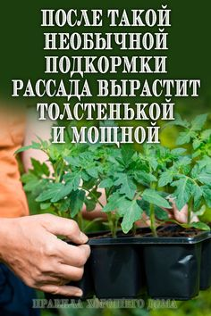 Growing vegetables info are available on our site. Take a look and you wont be sorry you did.
