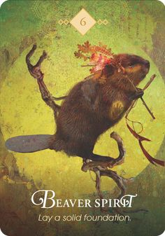"""Beaver Spirit  """"Lay a solid foundation.""""  Protection Message: Beaver Spirit has come to warn you to check for rotten wood in the… Spirit Animals Game, Spirit Animal Totem, Animal Spirit Guides, Animal Totems, Animal Meanings, Animal Symbolism, Pet Psychic, Psychic Readings, Oracle Tarot"""