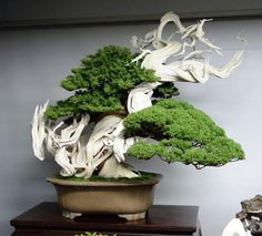 Kokufuten 2013, stunning Juniper Bonsai.    By: Enbapa Bonsaizen