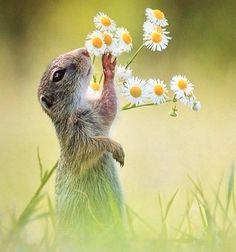 Oliendo a primavera