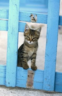 "* * KITTEN: "" Don'ts rank on dis fence. Me helpeds Tom Sawyer paints dis."""