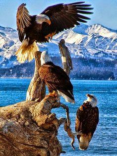 King Eagles!!!