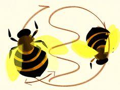 bee waggle dance illustration by Brannan McGill