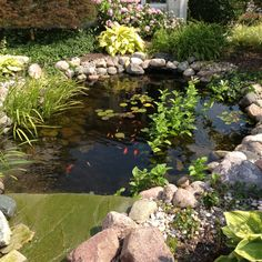 My cousin's beautiful back yard pond.