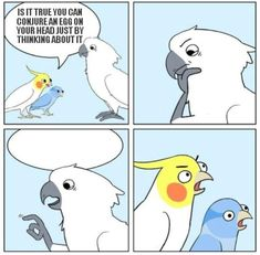 Best Pic Pet Birds comic Popular In the event that you share your life — and h. : Best Pic Pet Birds comic Popular In the event that you share your life — and home — with a dog bird, containing mess and keeping Funny Birds, Cute Birds, Cute Funny Animals, Cockatiel, Budgies, Bird Meme, Dankest Memes, Funny Memes, Cartoon Memes