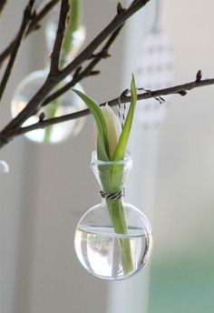 Tulips or other small flowers in tiny vases, hung on branches. Perfect display for spring!