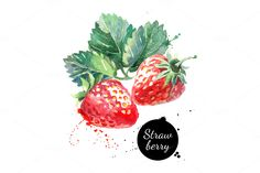 Illustration of Hand drawn watercolor painting strawberry on white background. Vector illustration of berries vector art, clipart and stock vectors. Watercolor Fruit, Fruit Painting, Watercolor Brushes, Watercolor Paintings, Fruits Drawing, Food Drawing, Drawing For Kids, Site Art, Chibi Kawaii