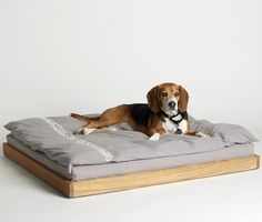 Handsome Beagle on James Perse dog bed