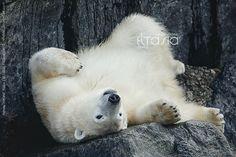 Happy Bear by Eltasia.deviantart.com on @deviantART