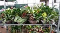 $39.95 Bolivian planters
