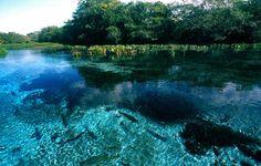 Viajam ao Pantanal