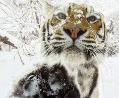 Nature Animals, Animals And Pets, Baby Animals, Funny Animals, Cute Animals, Wild Animals, Animals In Snow, Nature Nature, Crazy Cats