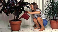 10 najjedovatejších izbových rastlín: Pozor! Niektoré z nich môžu spôsobiť aj smrť