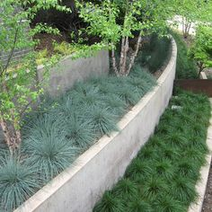 Concrete Retaining Wall Design, Pictures, Remodel, Decor and Ideas - page 8