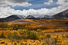 Aspen Tree Fall Yellow Color off Conway Summit, Lundy, CA by mikebaird, via Flickr