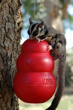 A new way to play with KONG :)