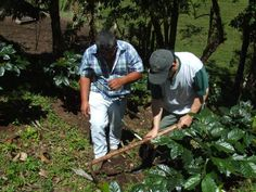 learning organic farming