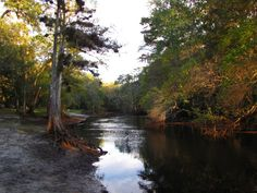 The Withlacoochee River: One of Florida's most scenic kayak trails