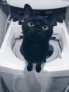 「眼差しの愛らしさには定評のある黒猫です」のYahoo!検索(リアルタイム) - Twitter(ツイッター)、Facebookをリアルタイム検索