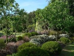 Image result for nz native garden design
