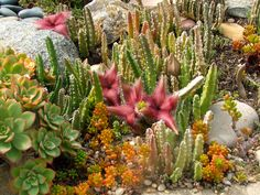 Flowering Succulents in backyard succulent garden Flowering Succulents, Succulents Garden, Cactus Plants, Succulent Landscaping, Water Wise, Ocean Themes, Landscape Design, Things To Do, Backyard