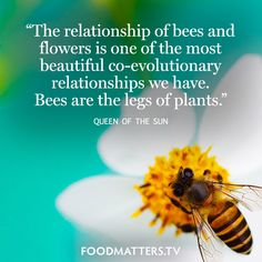 """""""The relationship of bees and flowers is one of the most beautiful co-evolutionary relationships we have. Bees are the legs of plants."""" - Queen of The Sun"""