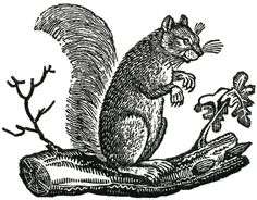 Free Fall Clip Art - Primitive Squirrels