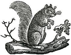 Free Fall Clip Art - Primitive Squirrels