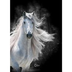 Stunning! | Horse | Pinterest ❤ liked on Polyvore featuring pictures