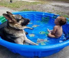 Aaawwwww it's a German Shepherd with a baby in a pool. He's calming him down.
